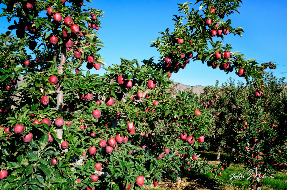 """Even if I knew that tomorrow the world would go to pieces, I would still plant my apple tree."" -- Martin Luther"