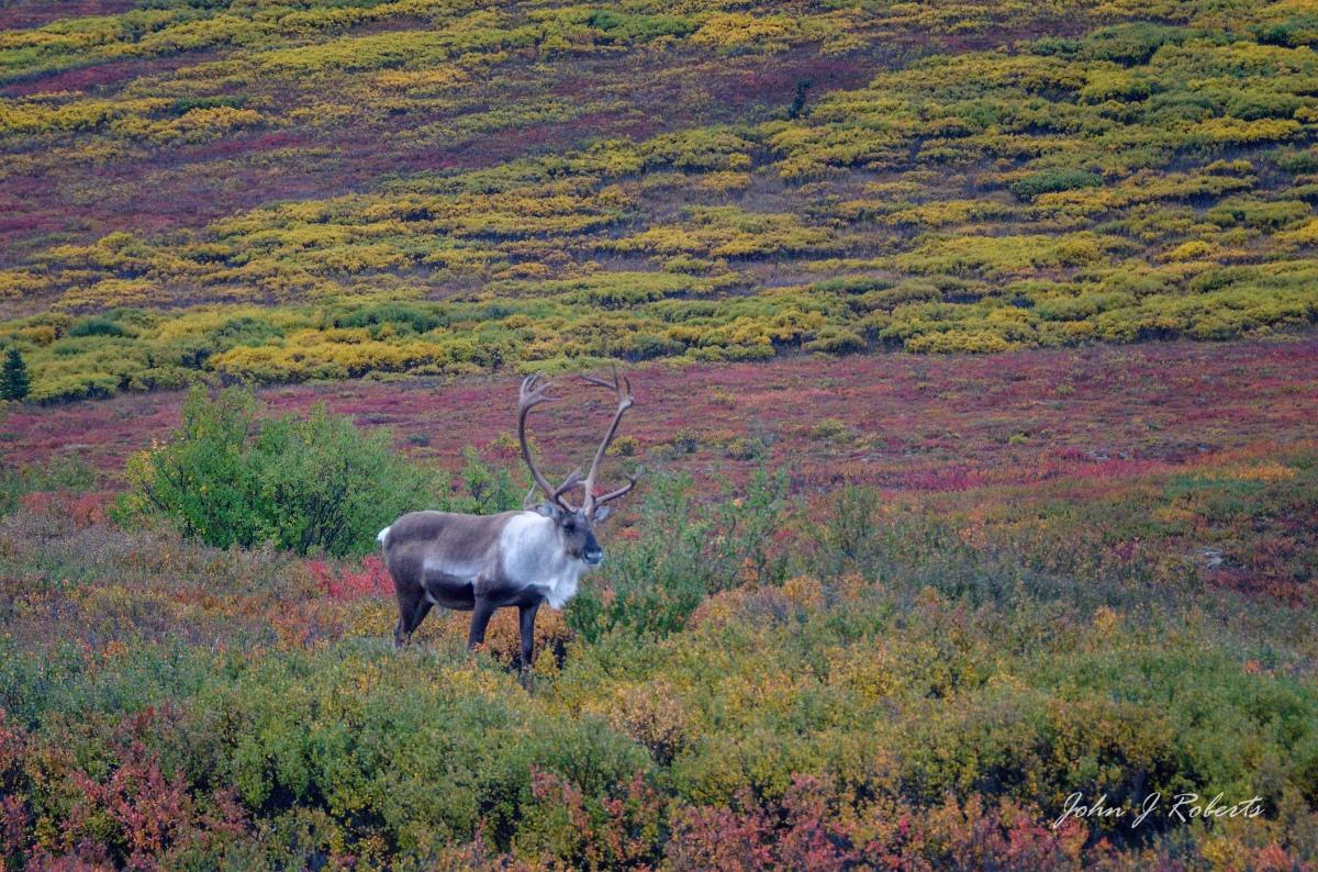 Autumn on the Tundra