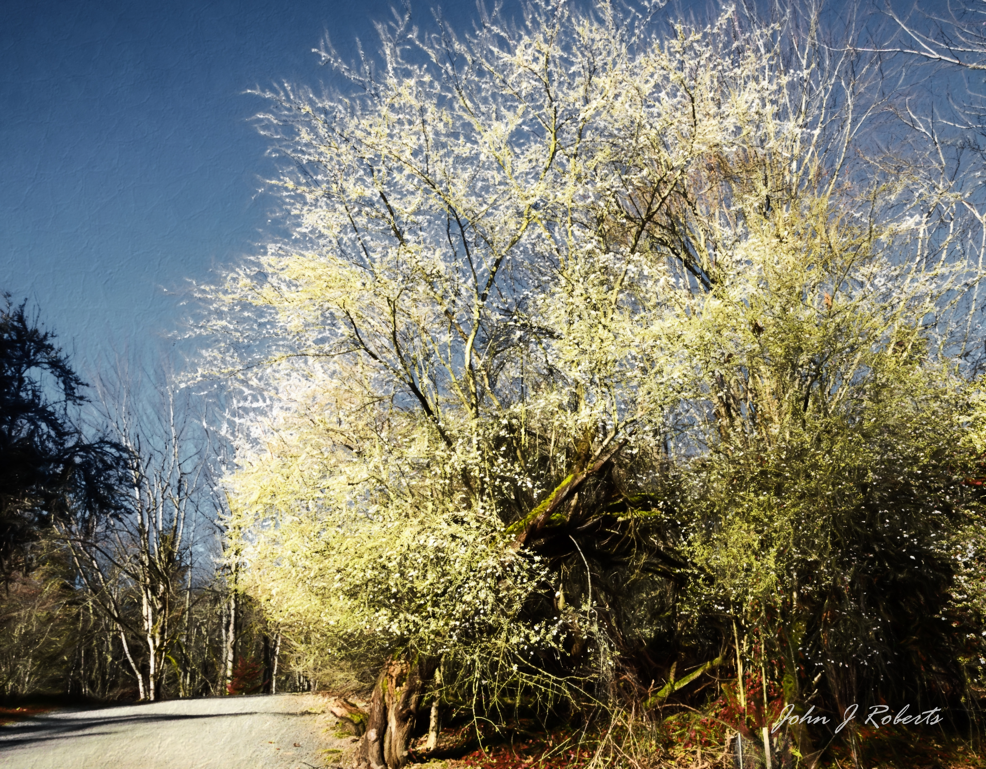 the garden in winter john roberts photography and other stuff